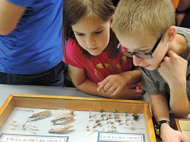 a young boy and girl looking at a case of bugs